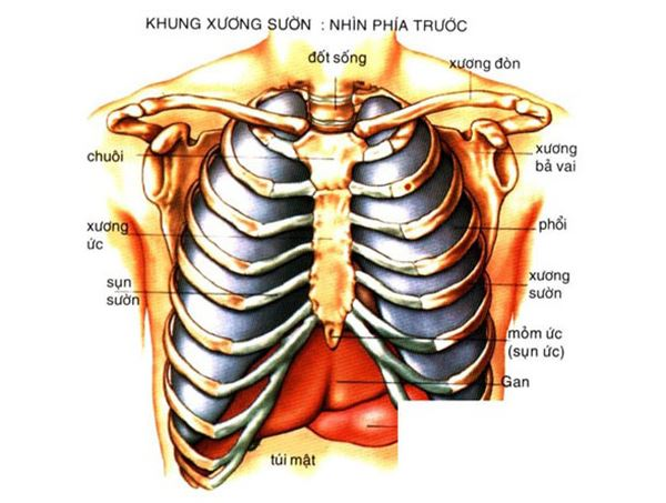 Xương lồng ngực