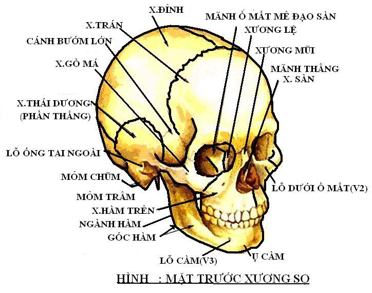 Xương sọ